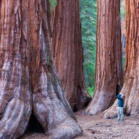 See the Redwoods, USA - Bucket List Ideas