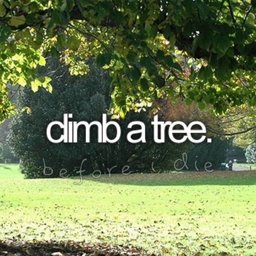 Climb a tree - Bucket List Ideas