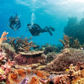 See & scuba dive at the Great Barrier Reef - Bucket List Ideas