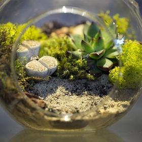 Create a terrarium - Bucket List Ideas