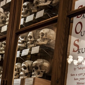 Adopt a Skull at the Mütter Museum - Bucket List Ideas
