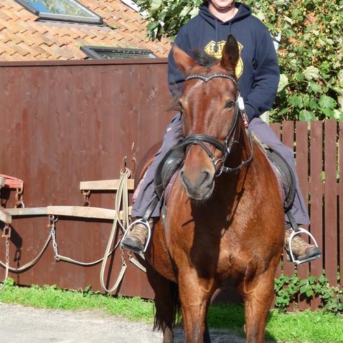 Go horse riding - Bucket List Ideas
