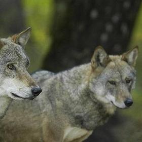 Visit Bialowieza Forest - Bucket List Ideas