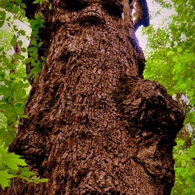 See the Witchy Tree in Kanawha County - Bucket List Ideas