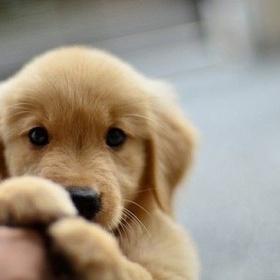 Adopt a puppy - Bucket List Ideas