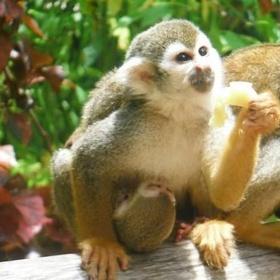 Interact with a monkey - Bucket List Ideas