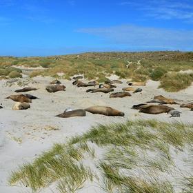 Visit Sea Lion Island - Bucket List Ideas
