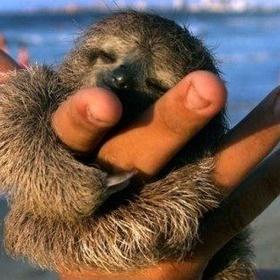 Hug a Sloth at the Sloth Sanctuary in Costa Rica - Bucket List Ideas