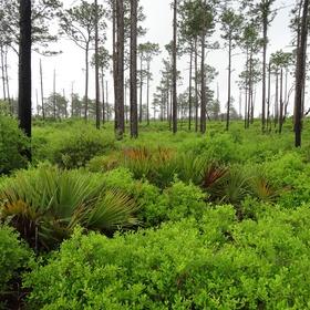 Hike-thru the Florida Scenic Trail - Bucket List Ideas