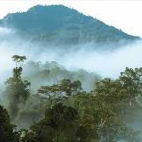 Go to Borneo - Bucket List Ideas