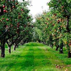 Go fruit picking - Bucket List Ideas