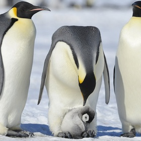 See penguins in the wild up close - Bucket List Ideas