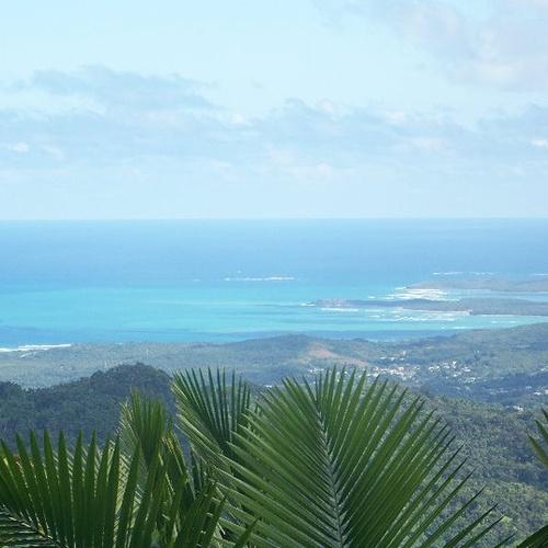 Go Hiking in a Rainforest - Bucket List Ideas