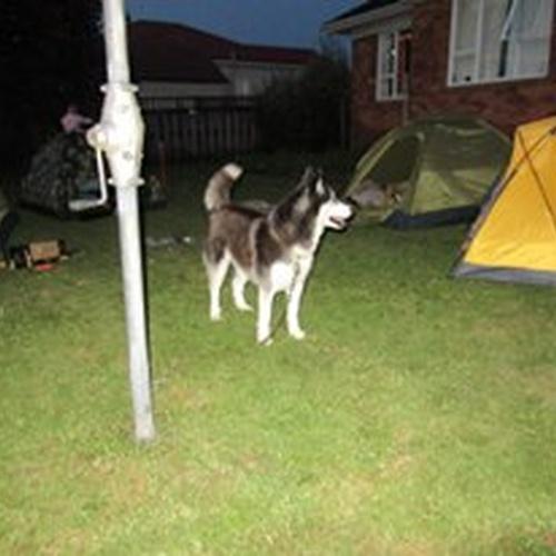 Camp in the back yard - Bucket List Ideas