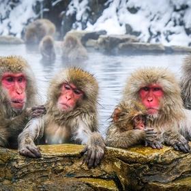 Visit Jigokudani Monkey Park, Japan - Bucket List Ideas