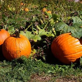 Autumn - Visit A Pumpkin Patch - Bucket List Ideas