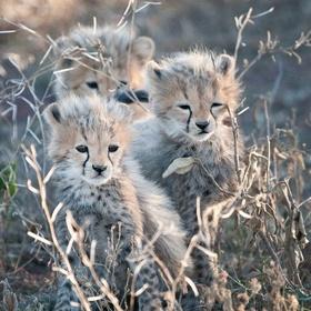 Hold a wild cheetah cub - Bucket List Ideas