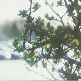 Grow a tree - Bucket List Ideas