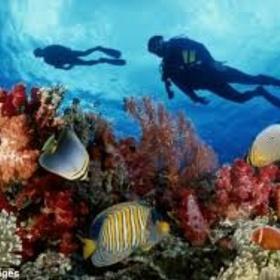 Snorkel the Great Barrier Reef - Bucket List Ideas