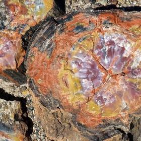 Visit the Petrified Forest in Arizona - Bucket List Ideas