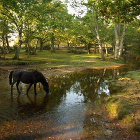 See the wild horses in the New Forest - Bucket List Ideas