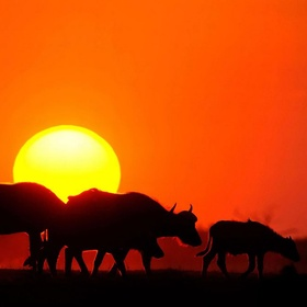 Live and work in several African countries - Bucket List Ideas