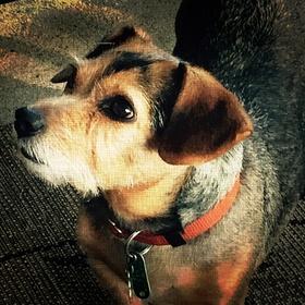 Adopt a rescue dog - Bucket List Ideas