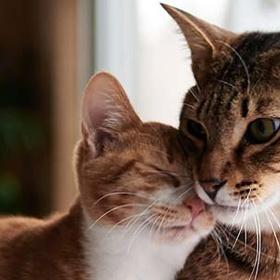 Get a CAT from a SHELTER - Bucket List Ideas