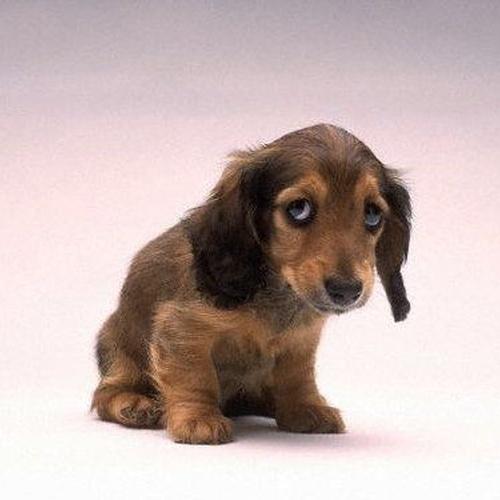 Get a puppy - Bucket List Ideas