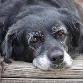 Adopt An Elderly Dog - Bucket List Ideas