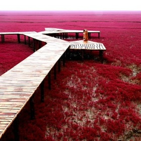 Visit Red Seabeach in China - Bucket List Ideas