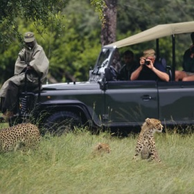 African Safari - Bucket List Ideas