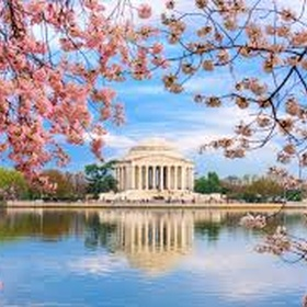 Cherry blossom festival - Bucket List Ideas