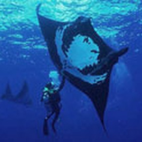 Dive with the Giant Mantas - Bucket List Ideas