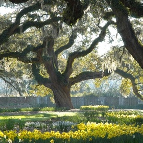 Visit the Brookgreen Gardens - Bucket List Ideas