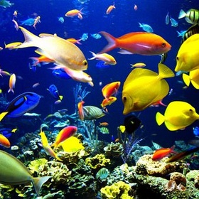 Become a Marine Biologist :3 - Bucket List Ideas