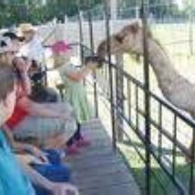 Drink camel's milk - Bucket List Ideas