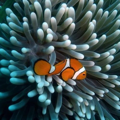 Go scuba diving in the Great Barrier Reef - Bucket List Ideas