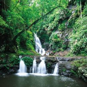 Visit Gondwana Rainforests of Australia - Bucket List Ideas