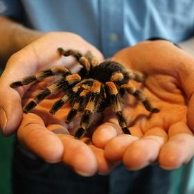 Hold a spider - Bucket List Ideas