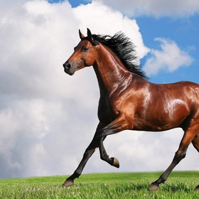 Ride a horse....once! - Bucket List Ideas