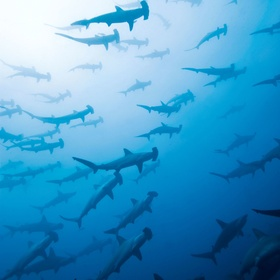 Dive with Hammerheads - Bucket List Ideas