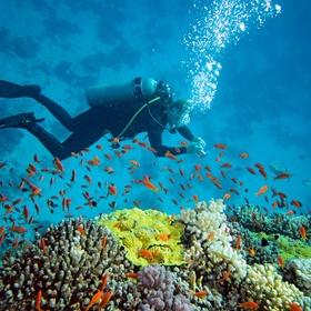 Go scuba diving in the andaman islands - Bucket List Ideas