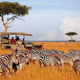 Do a safari in africa - Bucket List Ideas