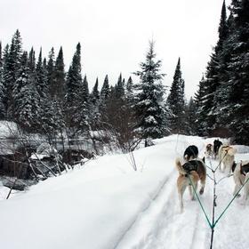 Go on a dog sledding expedition - Bucket List Ideas