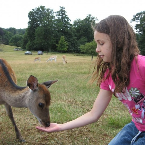 Have a wild deer eat out of your hand - Bucket List Ideas