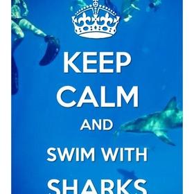 Spot a shark - Bucket List Ideas
