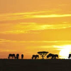 Go on an African Safari in Africa - Bucket List Ideas