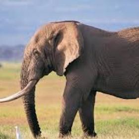 Visit An Elephant Sanctuary In Thailand - Bucket List Ideas