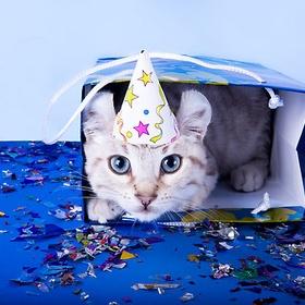 Get a CAT for a BIRTHDAY - Bucket List Ideas